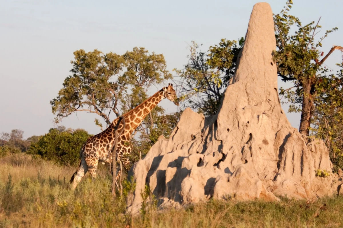 невероятные постройки животных