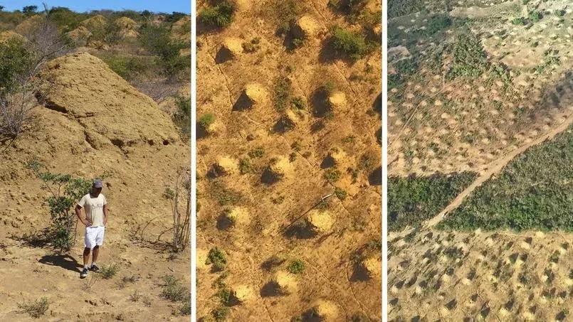 podzemnye termitnye goroda Подземный город термитов размером с Великобританию, гниющий «кратер» с яйцами и другие невероятные постройки животных